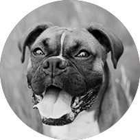 dog_image.png